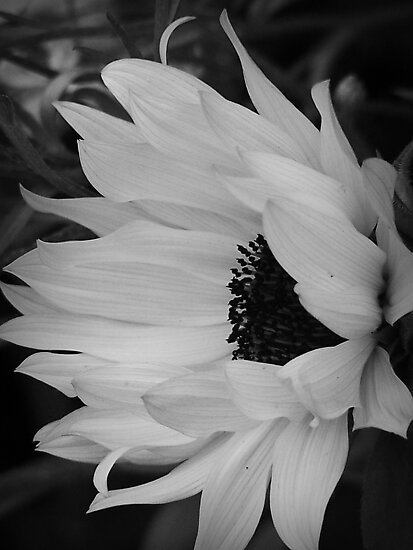 Black And White by Jonice