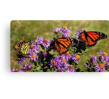 Butterfly Mania Canvas Print