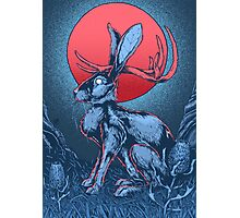 The Jackalope Photographic Print