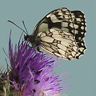 Marbled White by TheWalkerTouch