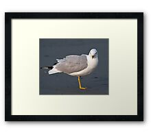 Model Seagull - Middletown, Rhode Island Framed Print