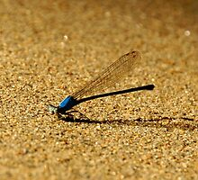Turquoise dragonfly on the Shunga by agenttomcat