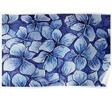 blue watercolor hydrangea Poster