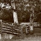 Stockyards at Smithton , Tasmania , Australia by phillip wise