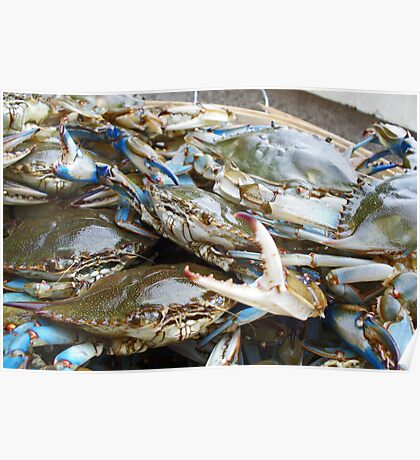 Blue Crabs in a basket Poster