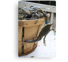 Runaway Blue Crab Canvas Print
