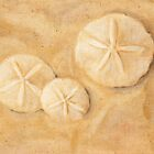 Sand Dollars by Marilyn Healey