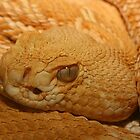 Albino western diamondbacked rattlesnake by Bluecornstudios