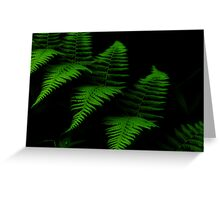 Rain Forest Fern Greeting Card