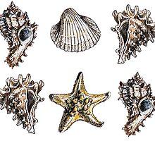 seashells pattern by nostiya