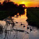 Swan Sunset by saxonfenken