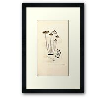 Coloured figures of English fungi or mushrooms James Sowerby 1809 0553 Framed Print