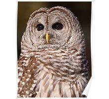 Dark Lenses / Barred Owl Poster