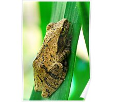 Small Grass Frog Poster