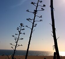 Santa Monica Silhouettes by Jennifer Rose Clement