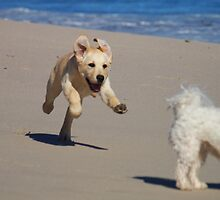 Doggy Excitement by Jevita