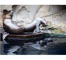 Faux Seal Sculpture Photographic Print