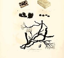 Coloured figures of English fungi or mushrooms James Sowerby 1809 1013 by wetdryvac