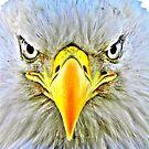 Intesity ~ HDR ~ Bald Eagle by lanebrain photography