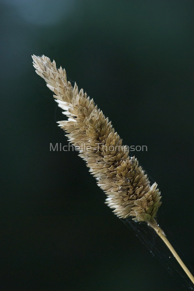 Grass with web by MIchelle Thompson