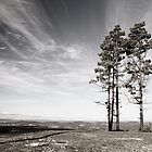 two trees on a hilltop overlooking canberra by ozmackem