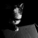 Cat in shadows by Keith Irving