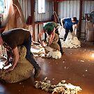Shearing time by Julie Sleeman
