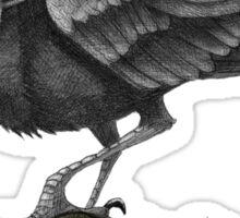 Buffalo Crow Sticker