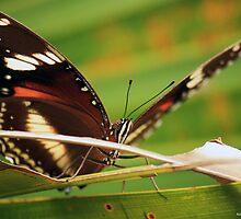 Butterfly by Adam Wakefield