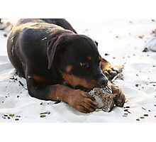 Vanuatu - The sun, the sand, the coconuts...and 4 big paws Photographic Print