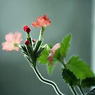 Delicate by ericb
