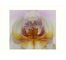 Colours of an orchid Art Print