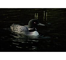 Common Loon Photographic Print