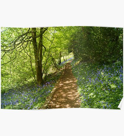 bluebell  pathway Poster
