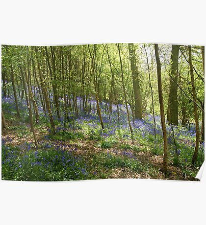 beautiful bluebells Poster