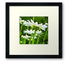 Daisy Lights... Framed Print