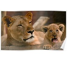 Mum and Cub Poster