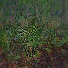 Woodland  Ferns  Scene  by John Todaro