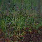 Woodland  Ferns  Scene  by fiat777