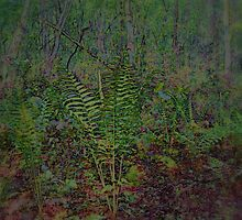 Woodland  Ferns  Scene  by Rick  Todaro