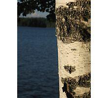 the birch Photographic Print