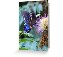 Butterfly flutters on pink..... Greeting Card