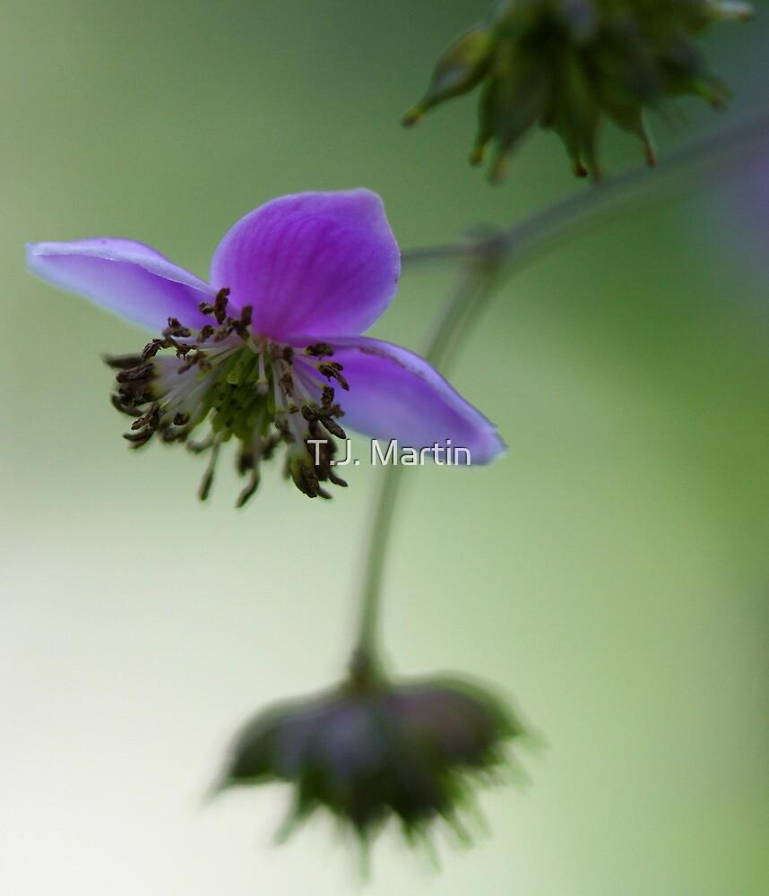 -Meadowrue -- Lavender Mist by T.J. Martin