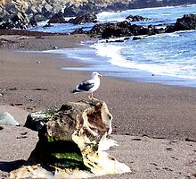 Seagull on Rock by Renee D. Miranda