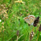 Summerflowers and a Butterfly by ienemien