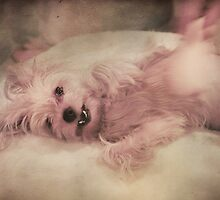 Pampered Pooch by Laurie Search