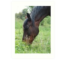 TOBY, THE RACKING HORSE Art Print