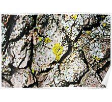 Do Tree's Bark Poster