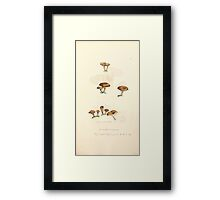 Coloured figures of English fungi or mushrooms James Sowerby 1809 0867 Framed Print