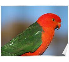 Australian King Parrot - Male Poster